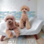 cutstyle_icon